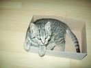 golden-cat-248685.jpg