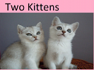 two-kittens-478849.png