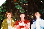 shishamo-558598.jpg